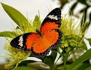 The lesson of the butterfly and life transformation